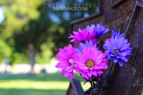 cemetery grave adoption crosses flowers 3