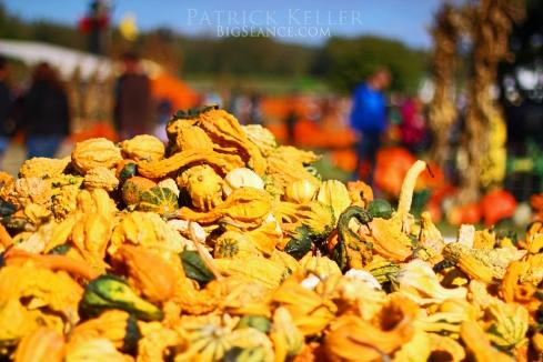 Rombachs Farm, pumpkin patch, big seance